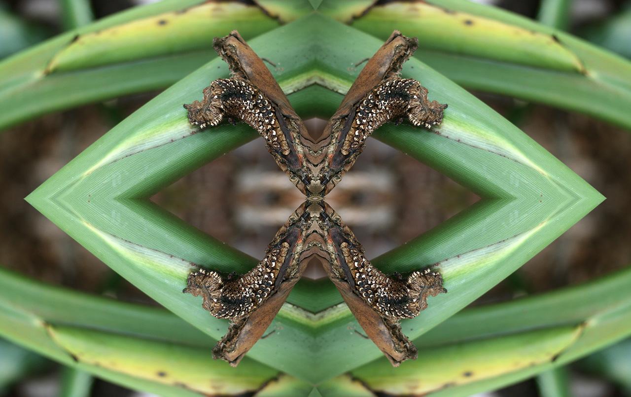 Australia 44: Kaleidoscopes